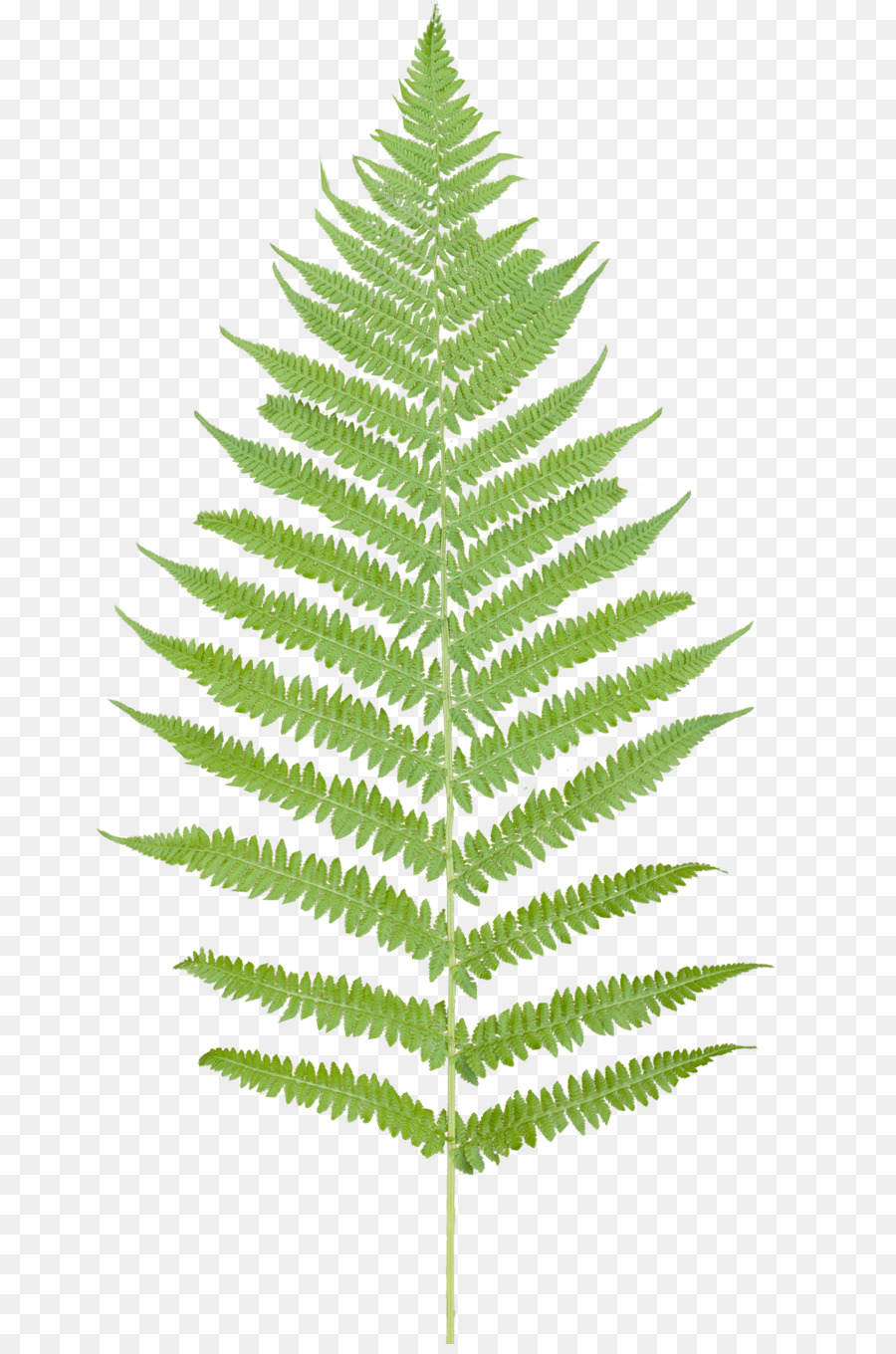 Free clipart fern leaf jpg royalty free library Family Tree Background clipart - Leaf, Plants, Plant, transparent ... jpg royalty free library