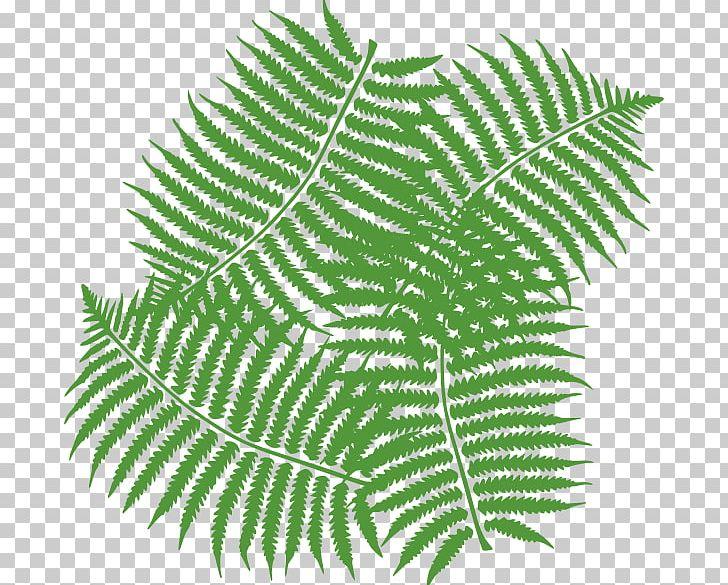 Free clipart fern leaf banner transparent stock Fern Leaf PNG, Clipart, Burknar, Clip Art, Drawing, Fern, Fern ... banner transparent stock