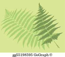 Free clipart fern leaf graphic download Fern Clip Art - Royalty Free - GoGraph graphic download