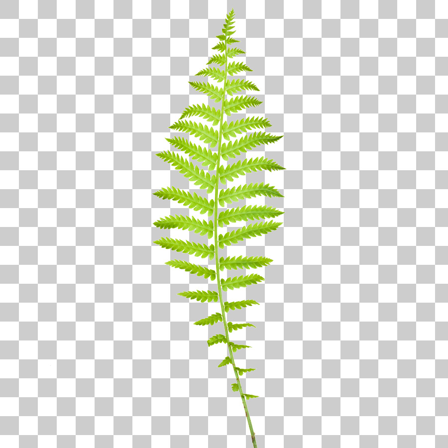 Free clipart fern leaf image black and white library Free Fern Leaf, Download Free Clip Art, Free Clip Art on Clipart Library image black and white library