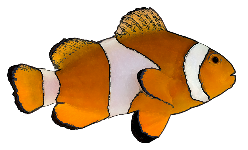 Free clipart fish images clip art freeuse download Marine Fish Clipart transparent - Free Clipart on Dumielauxepices.net clip art freeuse download