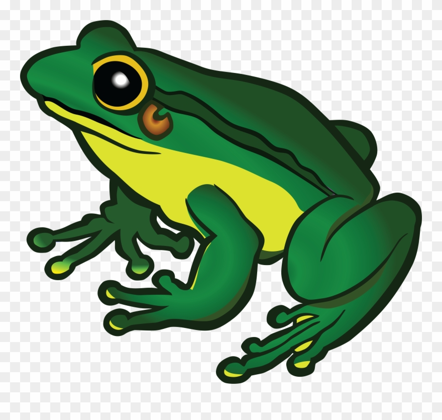Free clipart frog images picture transparent stock 1541 Free Clipart Of A Frog Free Eagle - Frog Clipart - Png Download ... picture transparent stock