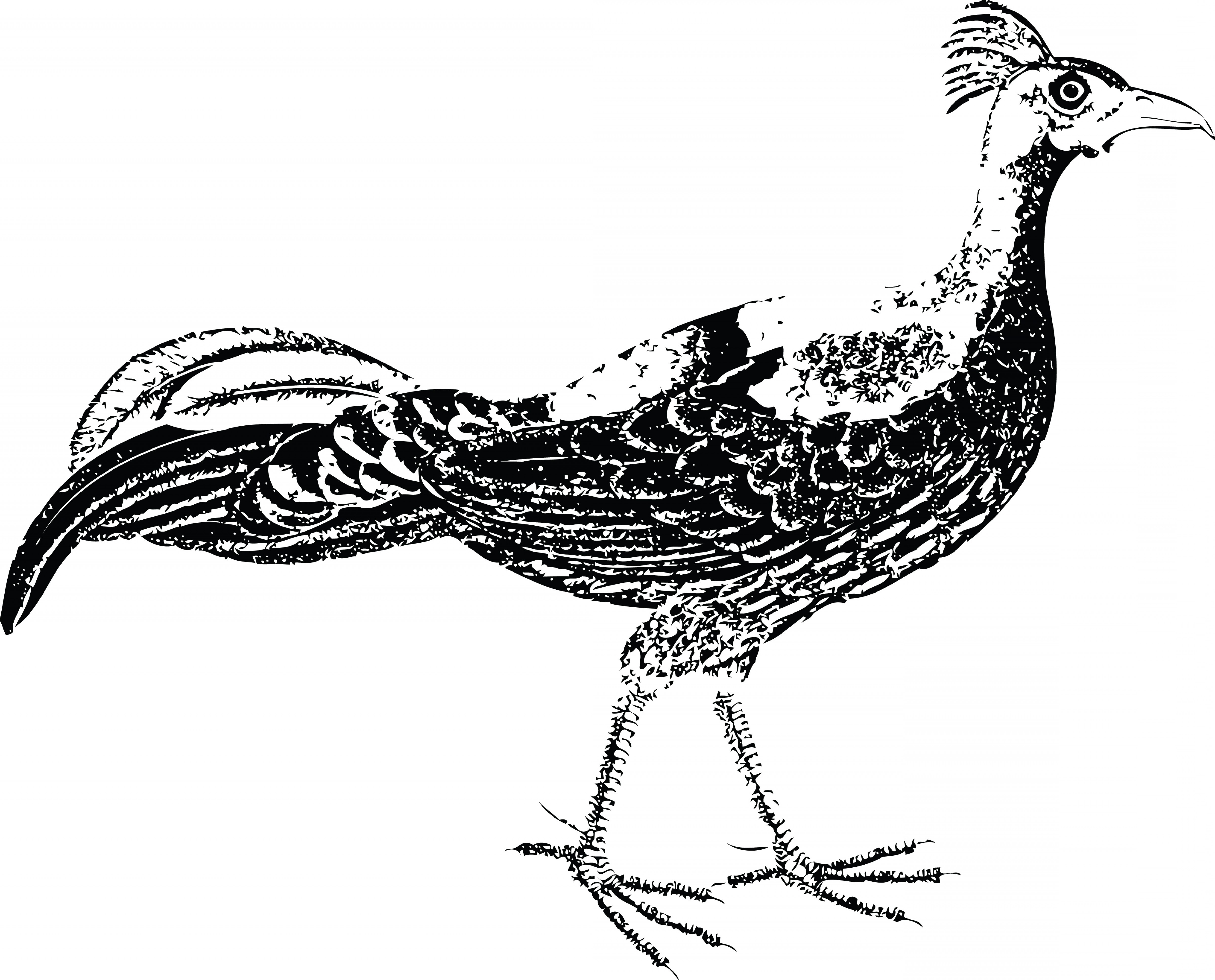 Free clipart generic bird images black and white. Of a pheasant soidergi
