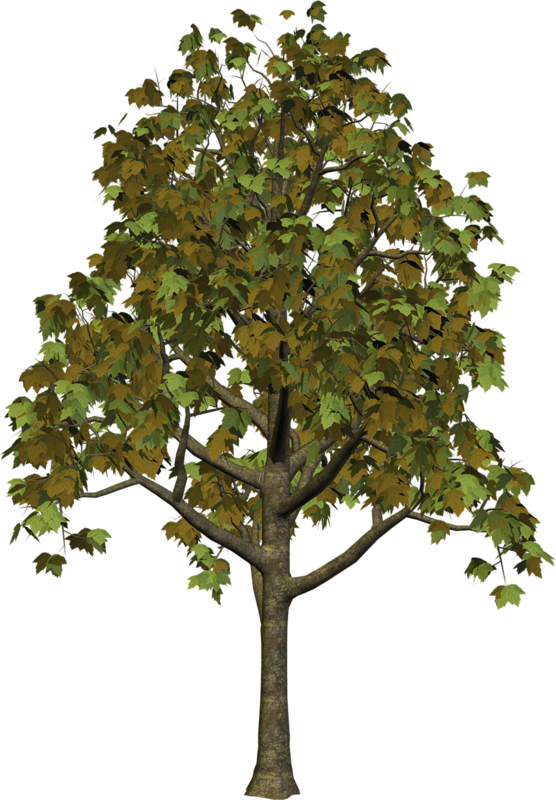Free clipart google tree jpg royalty free library Free clipart google tree - ClipartFest jpg royalty free library