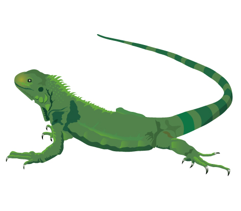 clipartlook. Free clipart iguana
