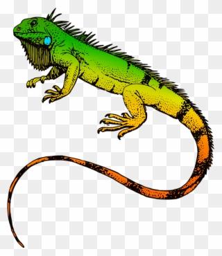 Free clipart iguana. Png clip art download