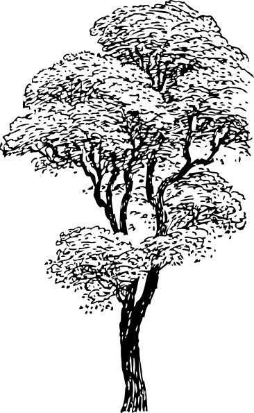 Free clipart images black and white tree picture stock free tall tree clipart black and white - ClipartFox | Art/Graphics ... picture stock