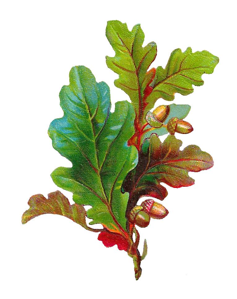 Pretty house clipart graphic free Antique Images: Free Acorn Clip Art: Digital Scrap of Acorn and Oak ... graphic free