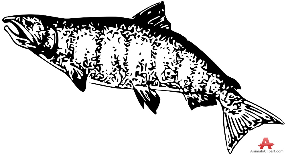 Free clipart images of california chinook salmon picture stock Salmon Clipart - ClipartPost picture stock