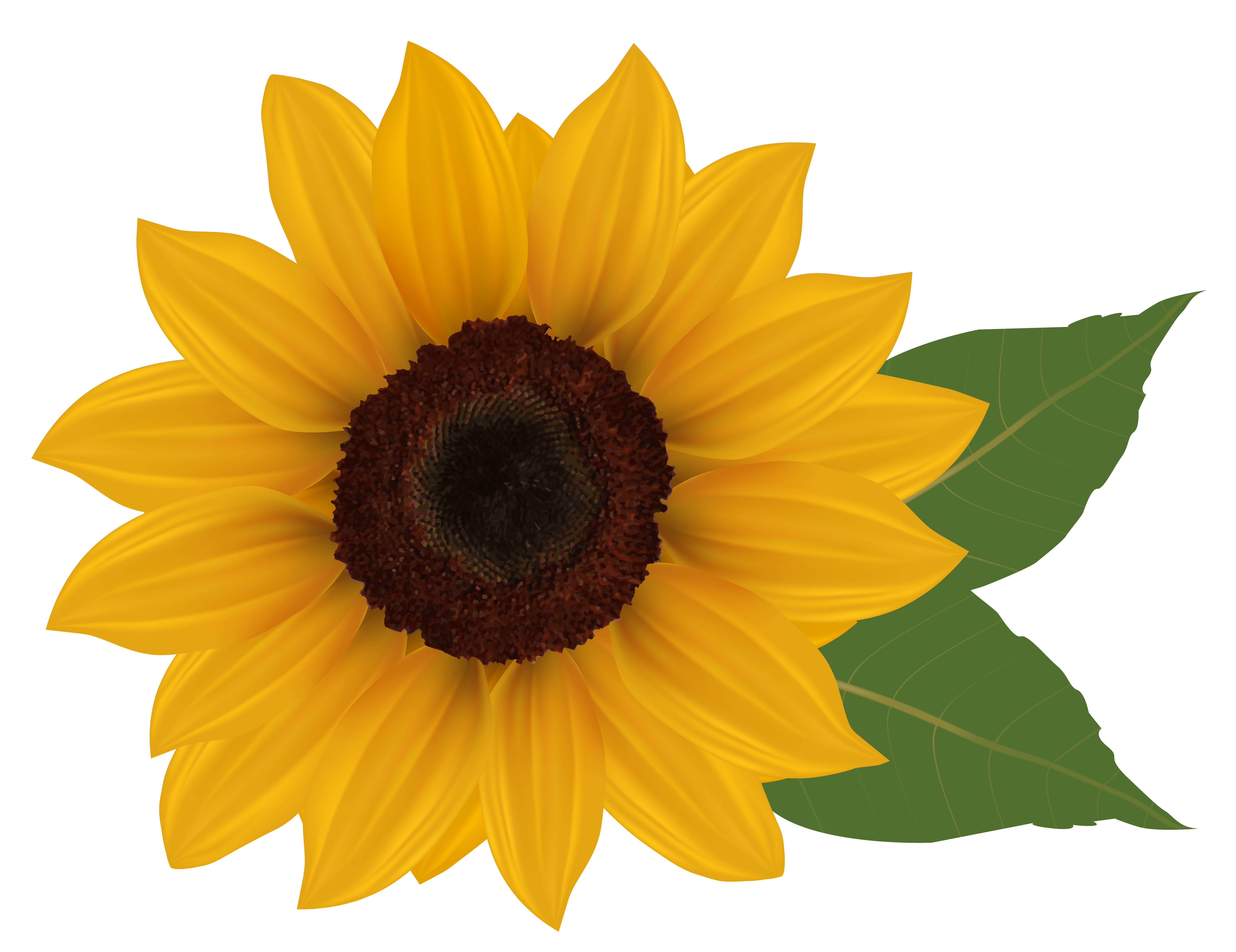 Free clipart images of sunflowers image black and white download Sunflower clip art free clipart images 2 clipartbold - ClipartBarn image black and white download