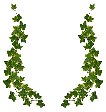 Ivy frame clipart clip download Free Ivy Cliparts, Download Free Clip Art, Free Clip Art on Clipart ... clip download
