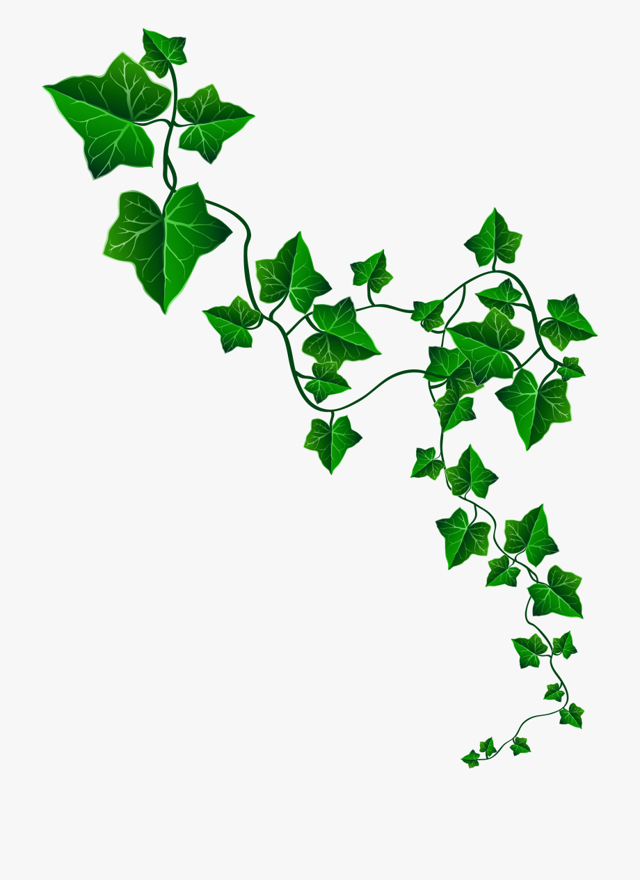 Vine decoration png image. Free clipart ivy