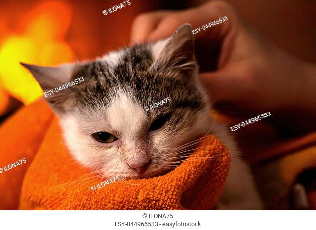 Free clipart kitten sleeping in front of fireplace picture library download Cats sleeping by a fireplace Stock Photos and Images | age fotostock picture library download