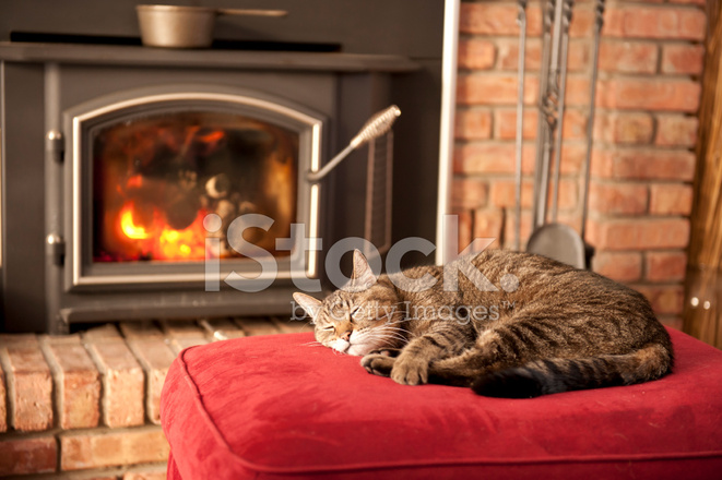 Free clipart kitten sleeping in front of fireplace jpg black and white Sleeping Cat Stock Photos - FreeImages.com jpg black and white