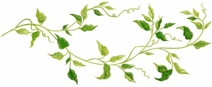 Free clipart leaves and vines banner royalty free Free Free Vine Cliparts, Download Free Clip Art, Free Clip Art on ... banner royalty free