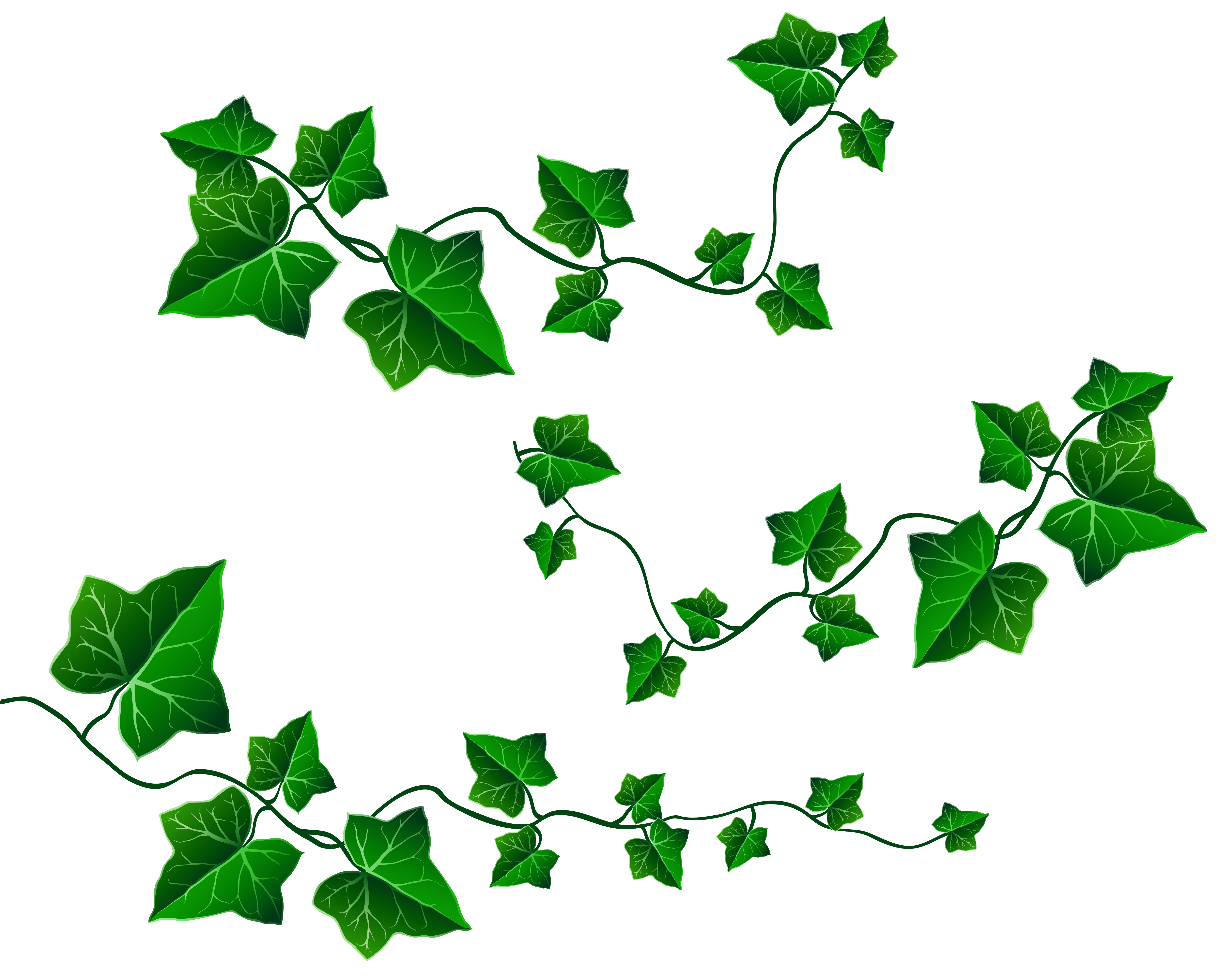 Transparent background ivy strand clipart vector free Vine Leaves Decoration PNG Clipart Picture | Gallery Yopriceville ... vector free