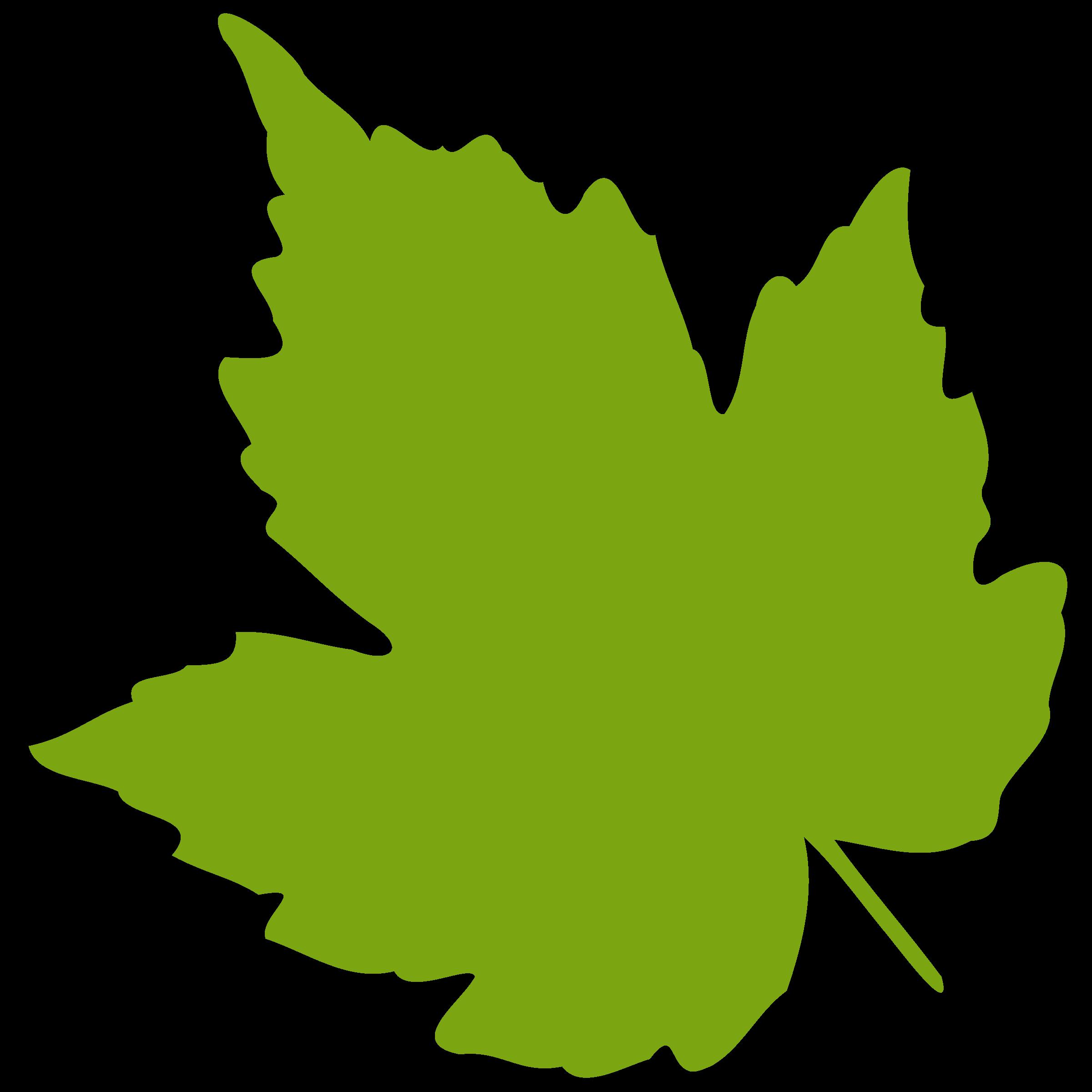 Vines download best on. Free leaf images clipart