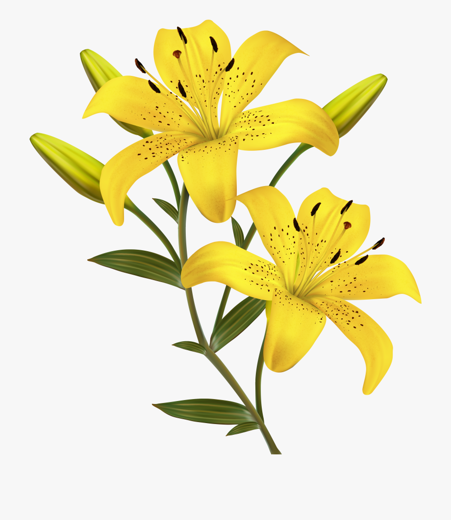 Lilies yellow bell flower. Free clipart lily