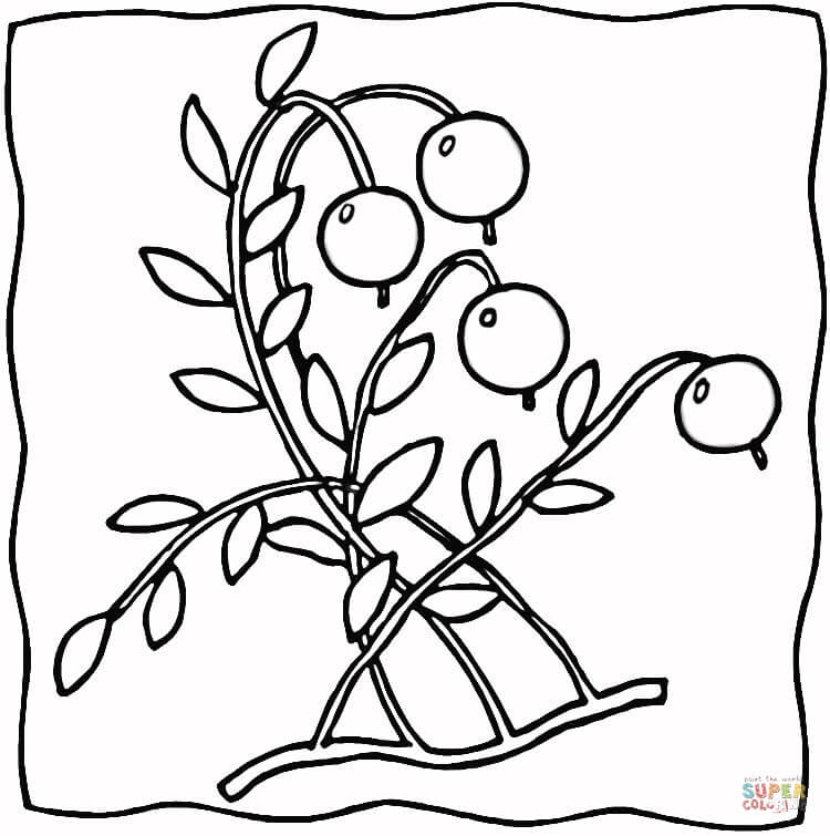 Free clipart of black and white cranberries png black and white stock Ripe Cranberries coloring page | Free Printable Coloring Pages png black and white stock