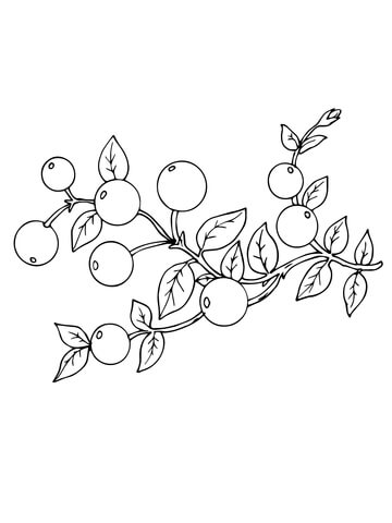 Free clipart of black and white cranberries png royalty free Cranberry coloring page | Free Printable Coloring Pages png royalty free