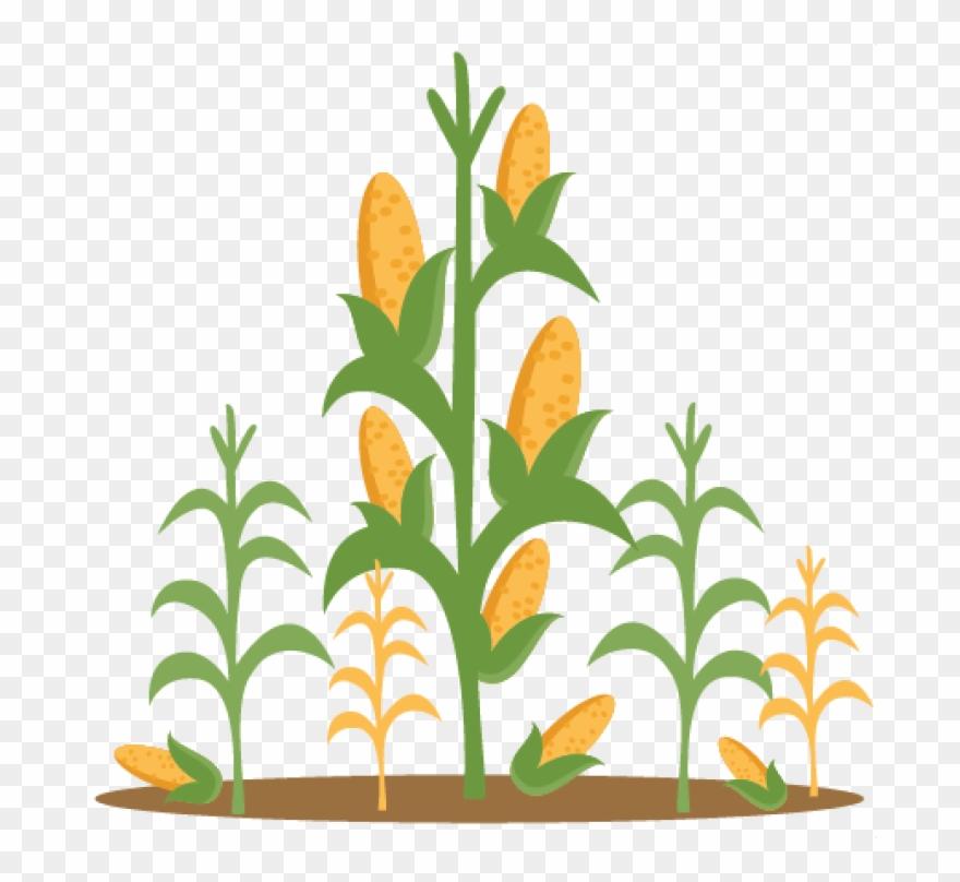 Free clipart of corn stalks. Clip art png download