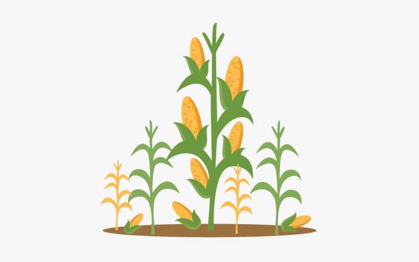 Svg scrapbook cut clip. Free clipart of corn stalks