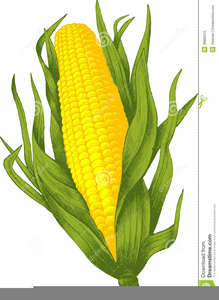 Images at clker com. Free clipart of corn stalks