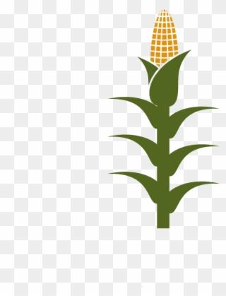 Free clipart of corn stalks. Png stalk clip art