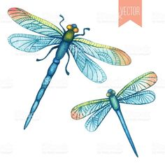 Free clipart of dragonflies
