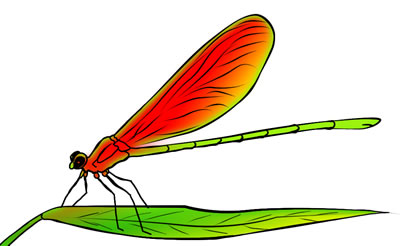 Free clipart of dragonflies jpg freeuse 50 FREE Dragonfly Clip Art Drawings and Colorful Images jpg freeuse