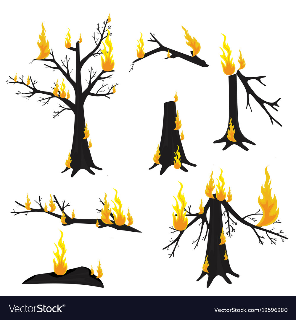 Free clipart of fire burning in forest clip transparent stock A burning tree forest fire clip transparent stock
