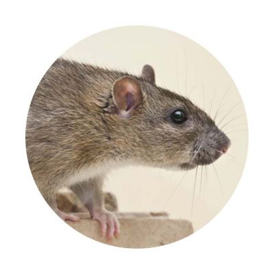 Free clipart of mouse holes in houses. Insect and pest control