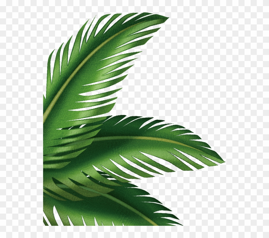 Free clipart of palm leaves. Leaf arecaceae clip art