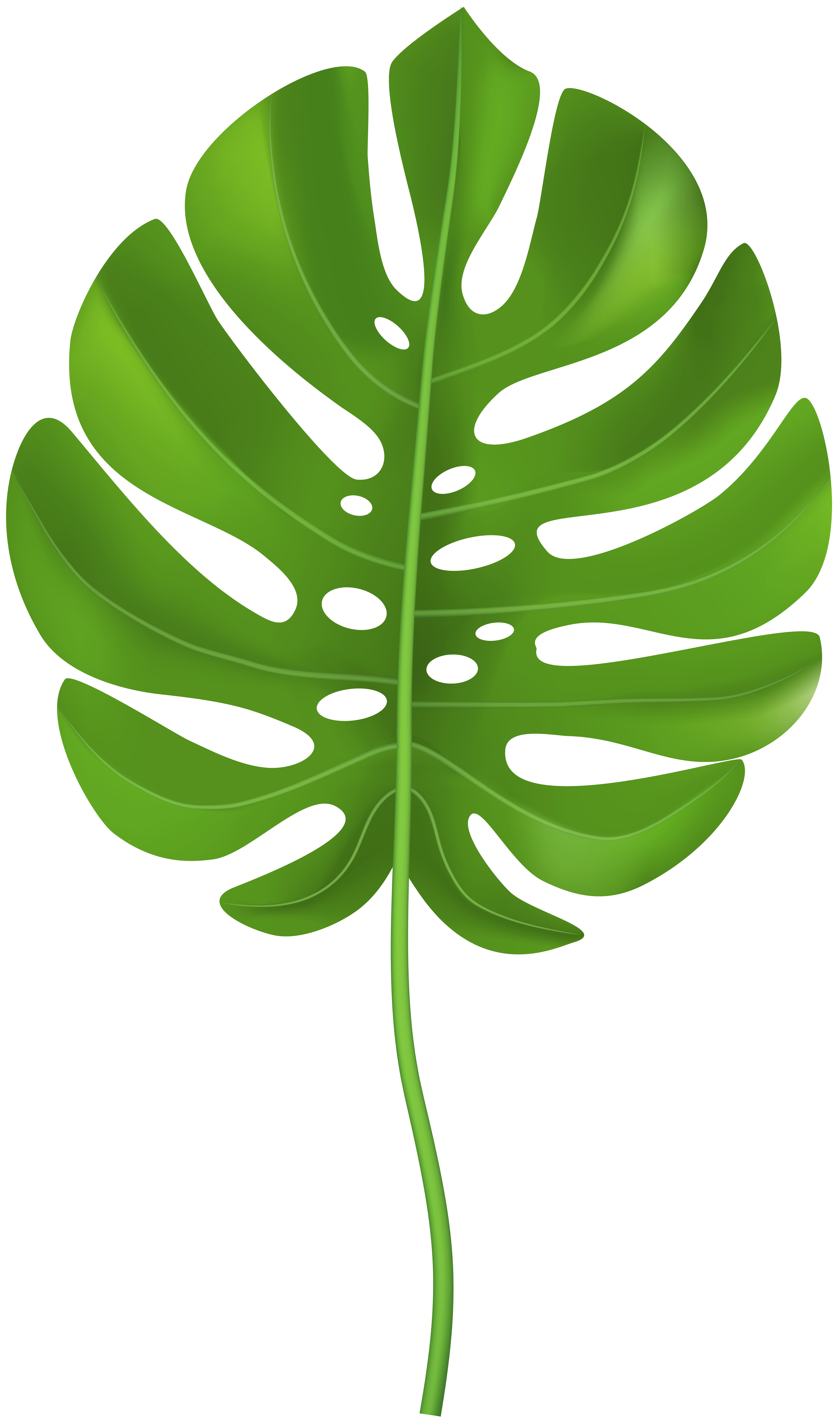 Free clipart of palm leaves. Tropical leaf transparent png