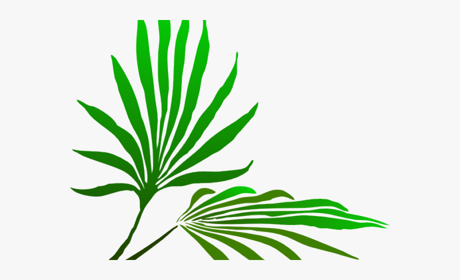 Free clipart of palm leaves. Leaf frond clip art