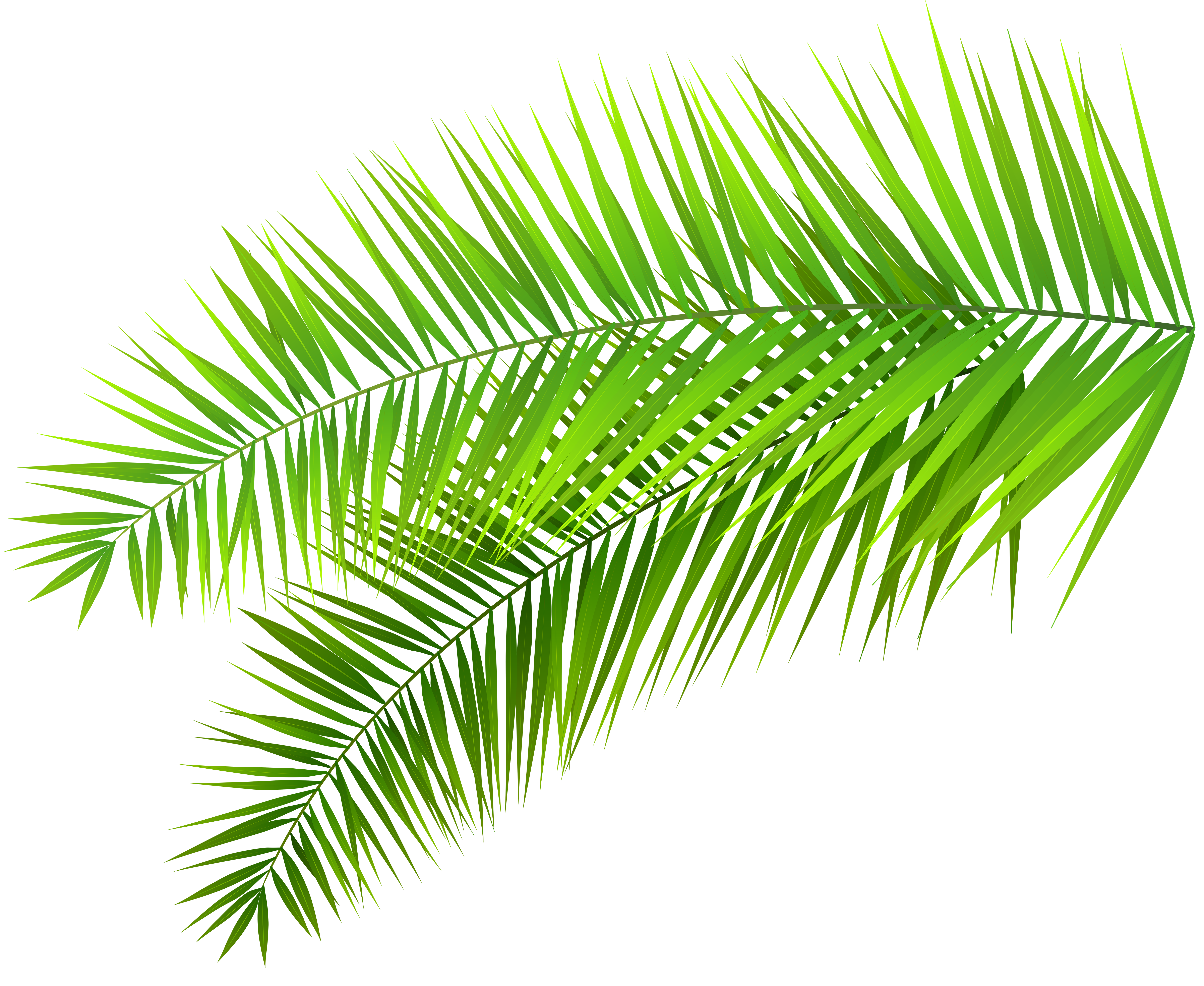 Branch cliparts download clip. Free clipart of palm leaves