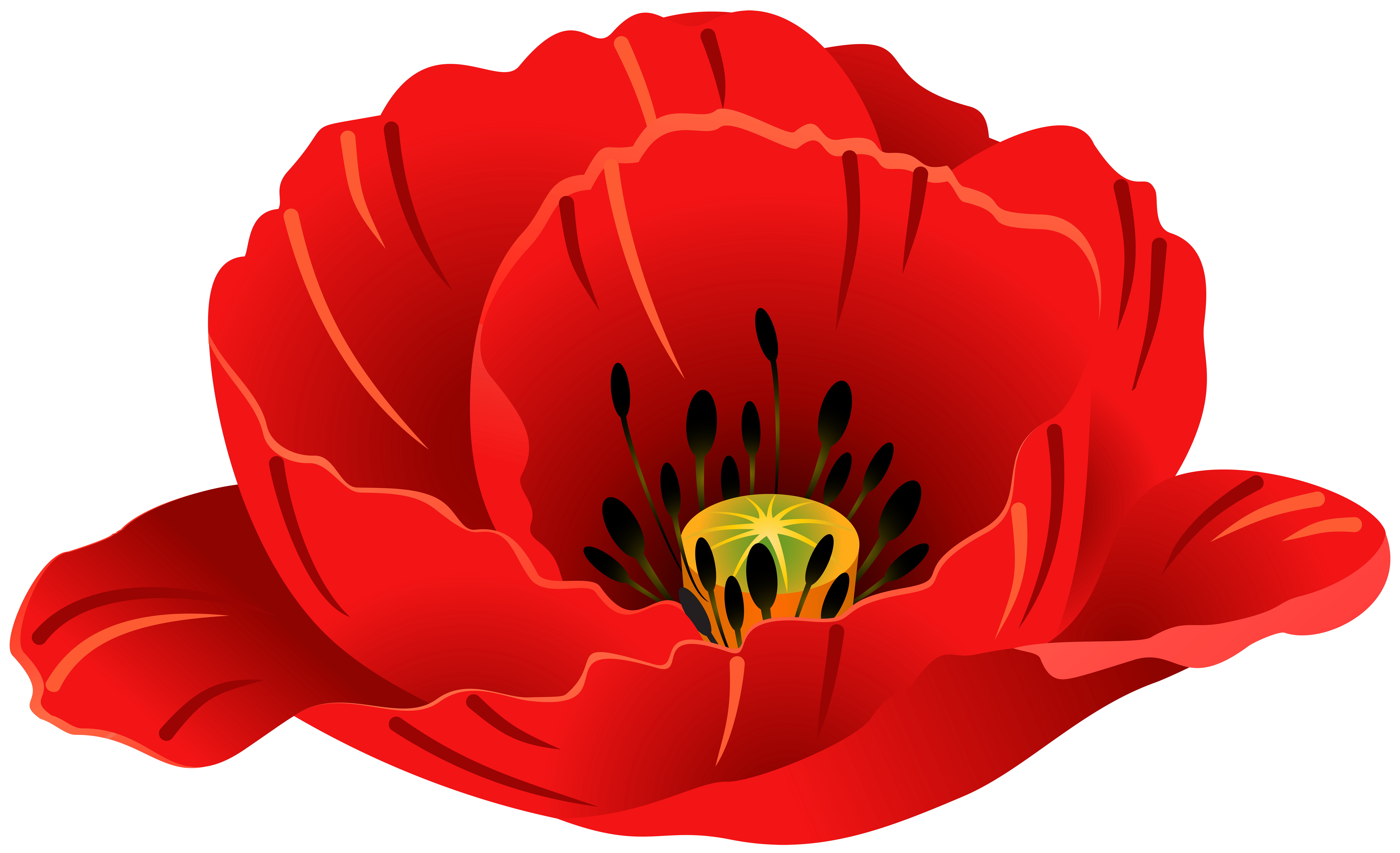 Free clipart of poppies
