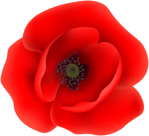 Free clipart of poppies. How to draw a