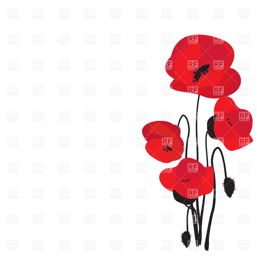Flower red plant poppy. Free clipart of poppies