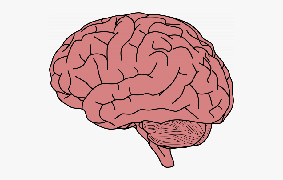 Free clipart of the brain. Transparent images pngio background