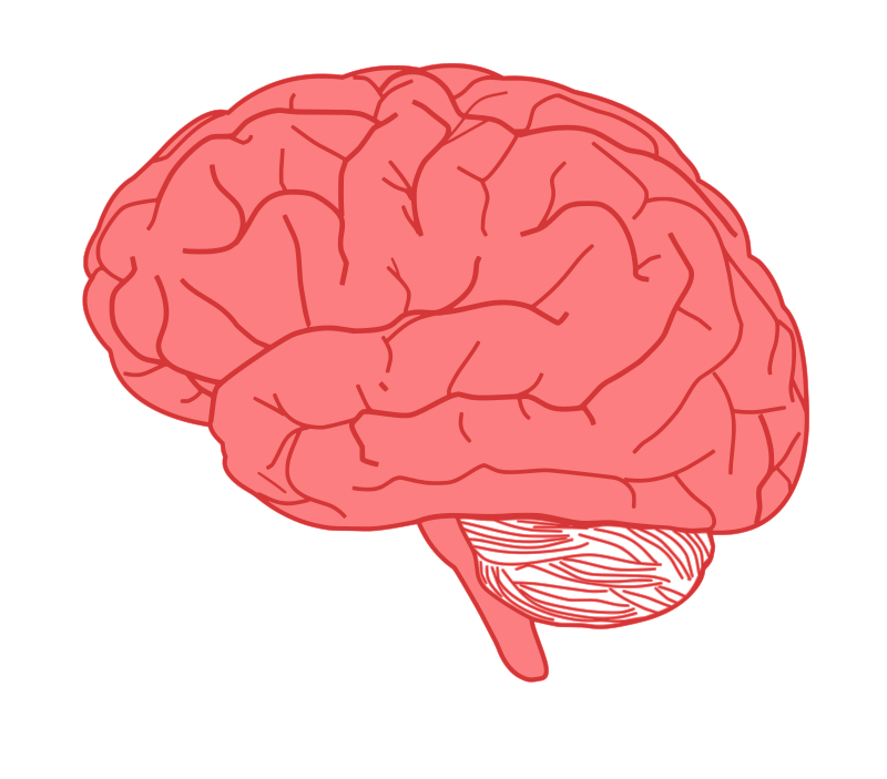 In profile pearish . Free clipart of the brain