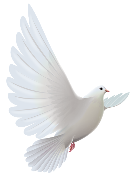 Free clipart of transparent background of bible sayings about birds graphic free stock Pin by Mag da léna on png vták | Dove images, White doves, Dove pictures graphic free stock