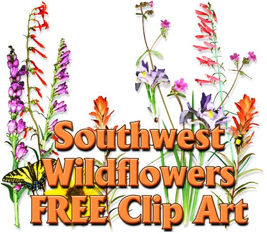 Wildflower cliparts download clip. Free clipart of wild flowers