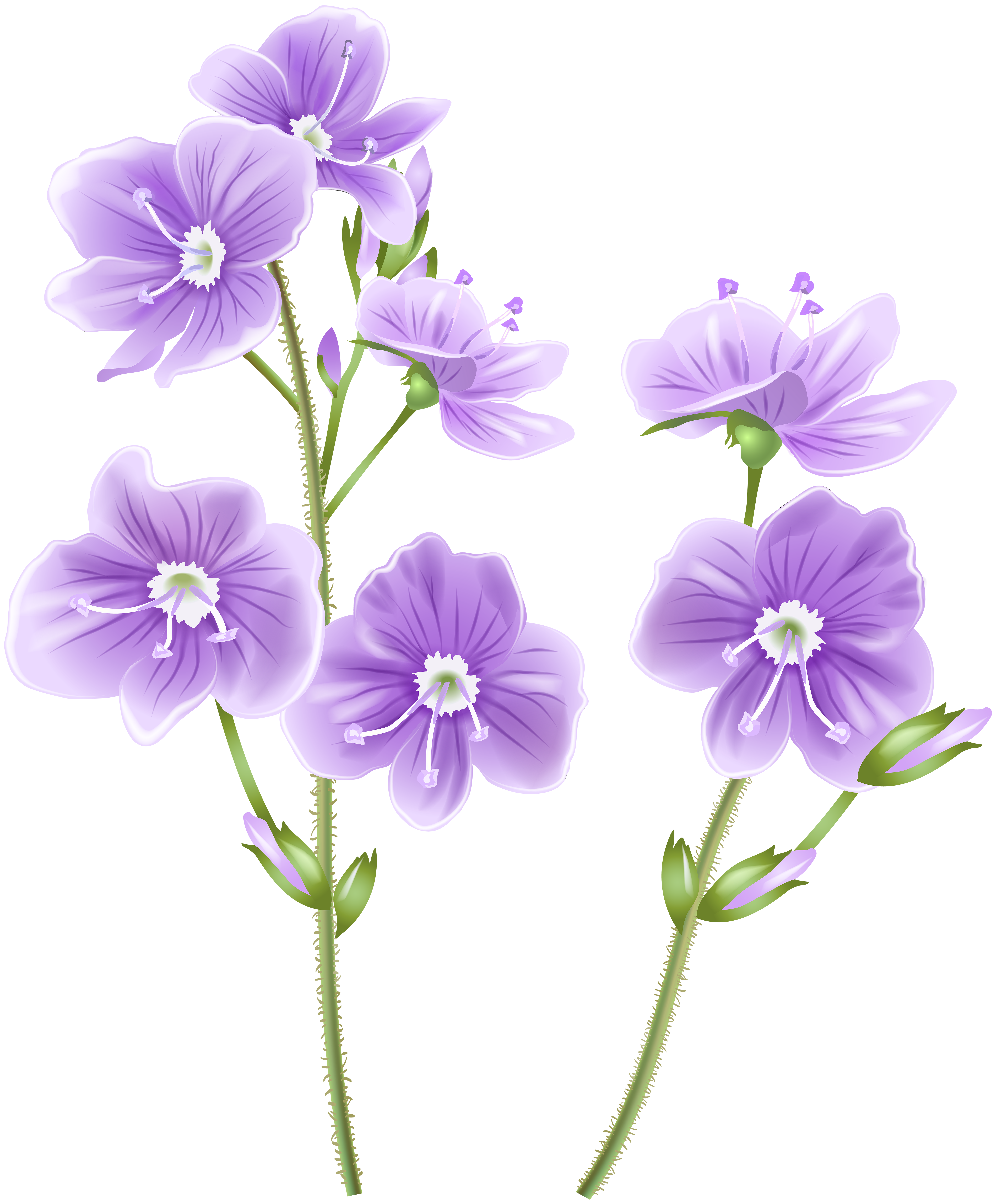Flower png clip art. Free clipart of wild flowers