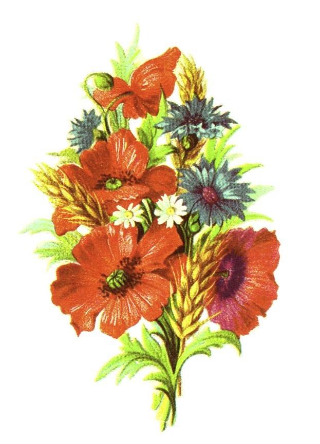 Public domain vintage floral. Free clipart of wild flowers
