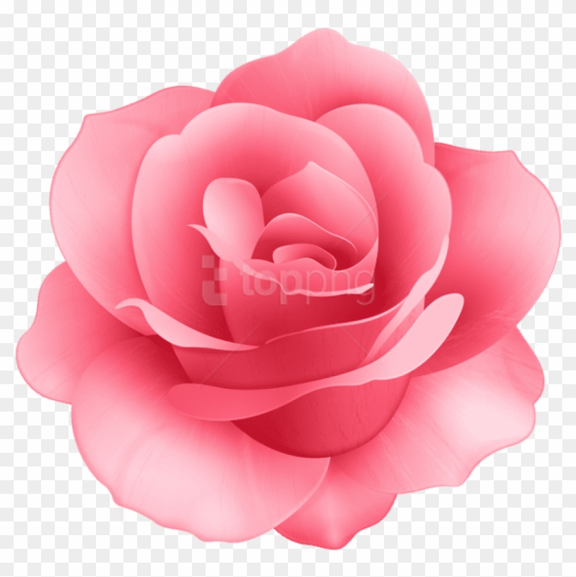 Free clipart pink rose hair peice w no background free library Free Png Download Rose Flower Png Images Background - Rose Flower ... free library
