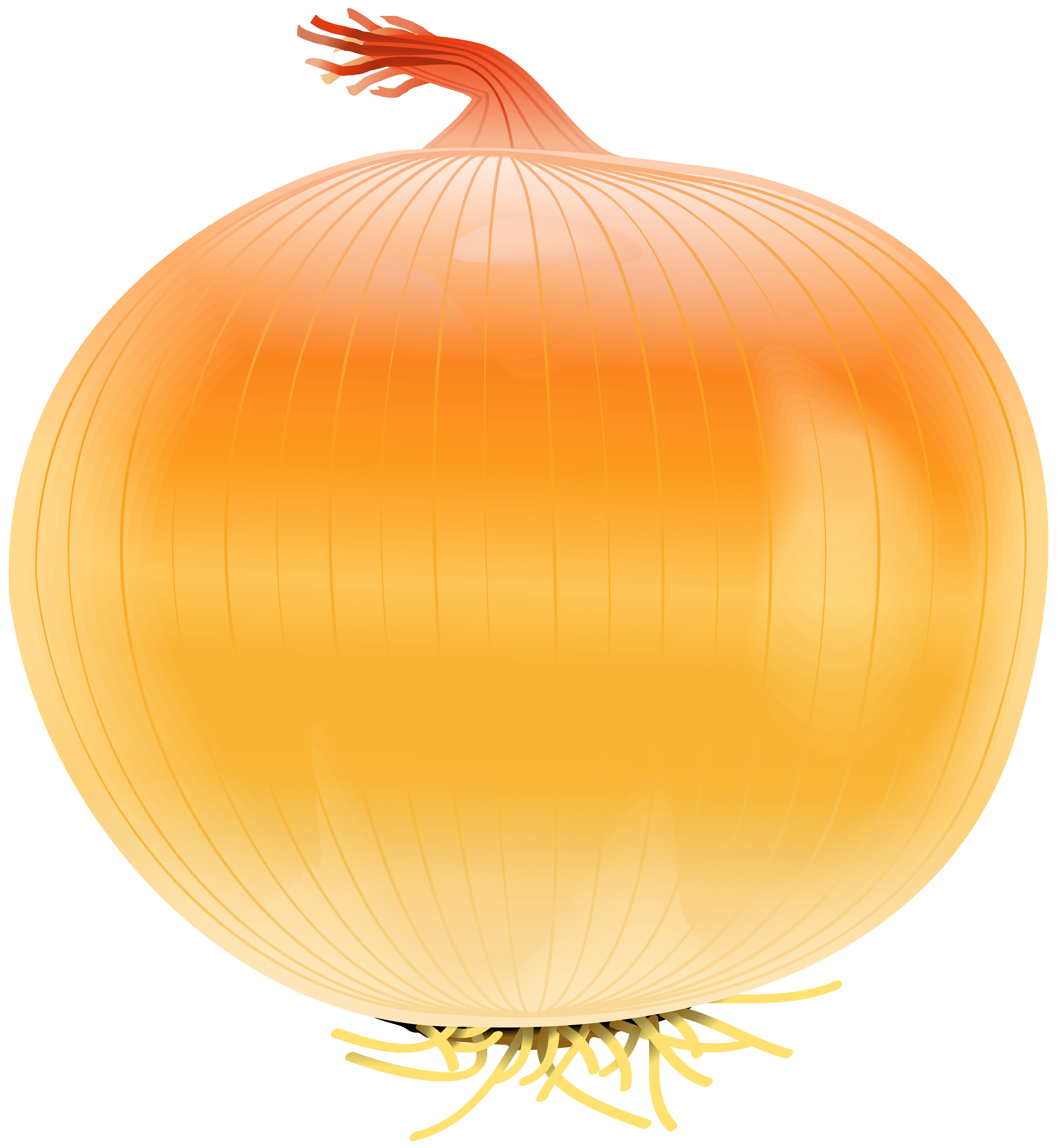 Free clipart pumpkin painting graphic freeuse download Onion Free PNG Clip Art Image | Gallery Yopriceville - High-Quality ... graphic freeuse download