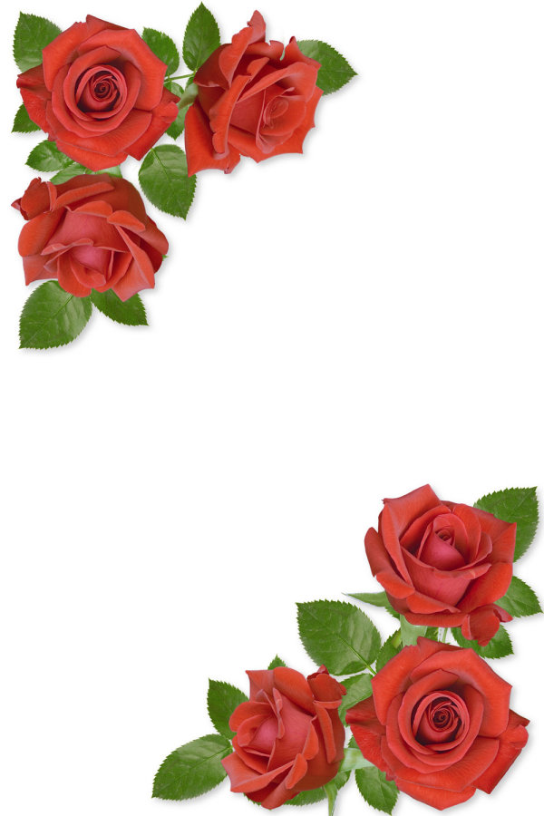 Flower borders download clip. Free clipart rose border