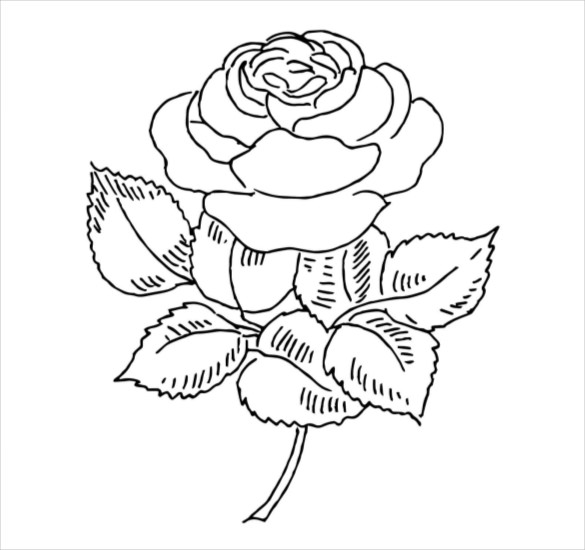 Free clipart rose with thornes coloring page clip transparent stock 21+ Flower Coloring Pages -PSD, AI, Vector EPS | Free & Premium ... clip transparent stock