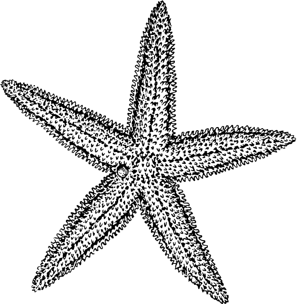 Free clipart starfish images banner transparent stock Purple Starfish Clipart | Clipart Panda - Free Clipart Images ... banner transparent stock